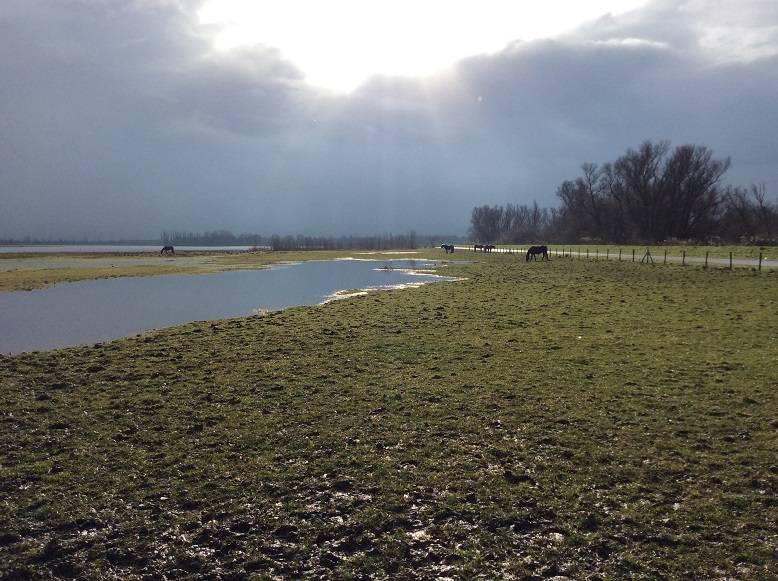 biesbosch 01